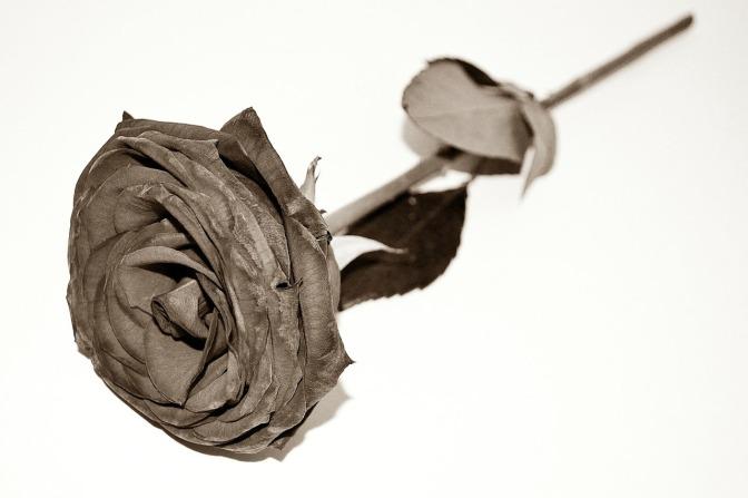 Rambling Rose On The Sidewalk