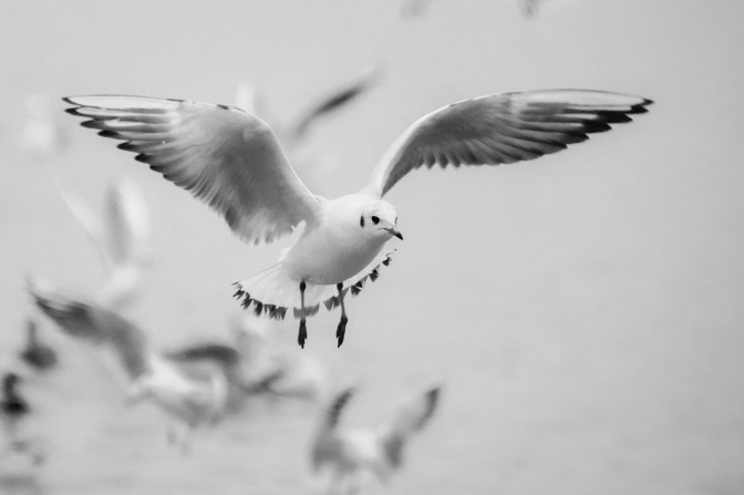 Shia LaBeouf and Judaism's White Flight